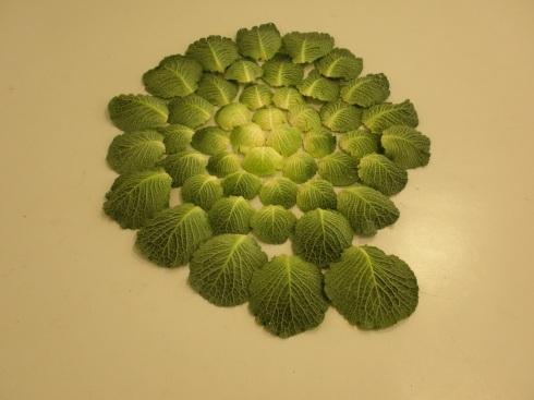 cabbage-spiral1